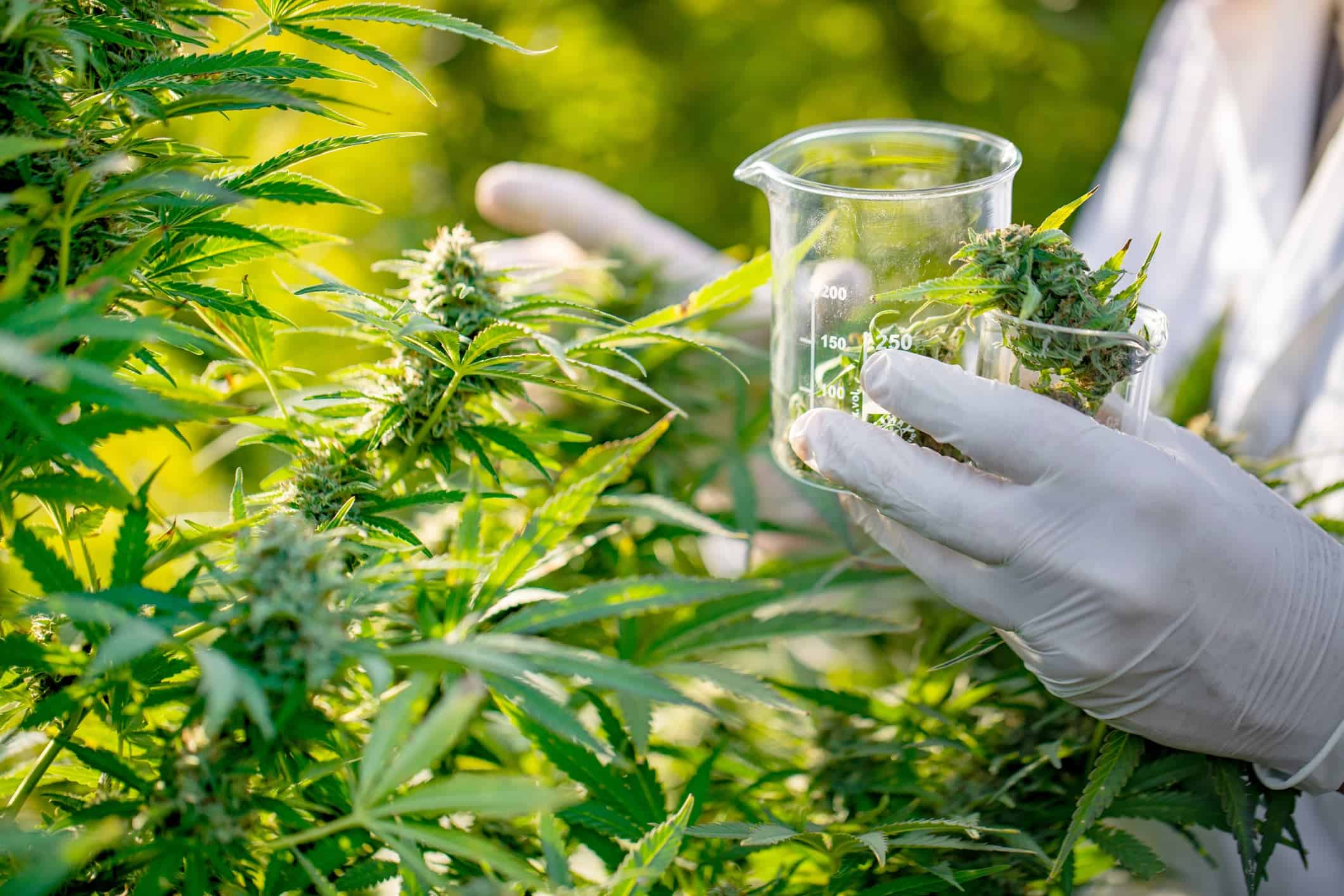 The Most Promising Research on CBD and Medical Marijuana